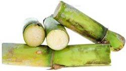 Zuckerrohrextrakt